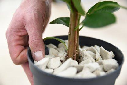 Growstones om wiet te kweken