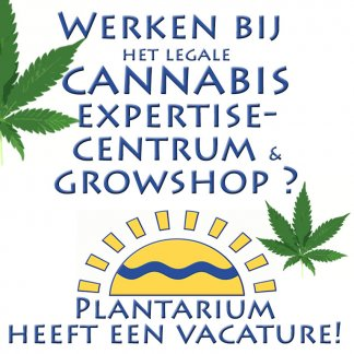 Vacature cannabis