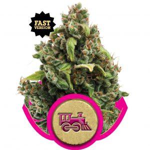 Candy Kush Express FF