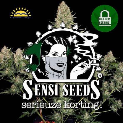 Sensi Seeds goedkoop