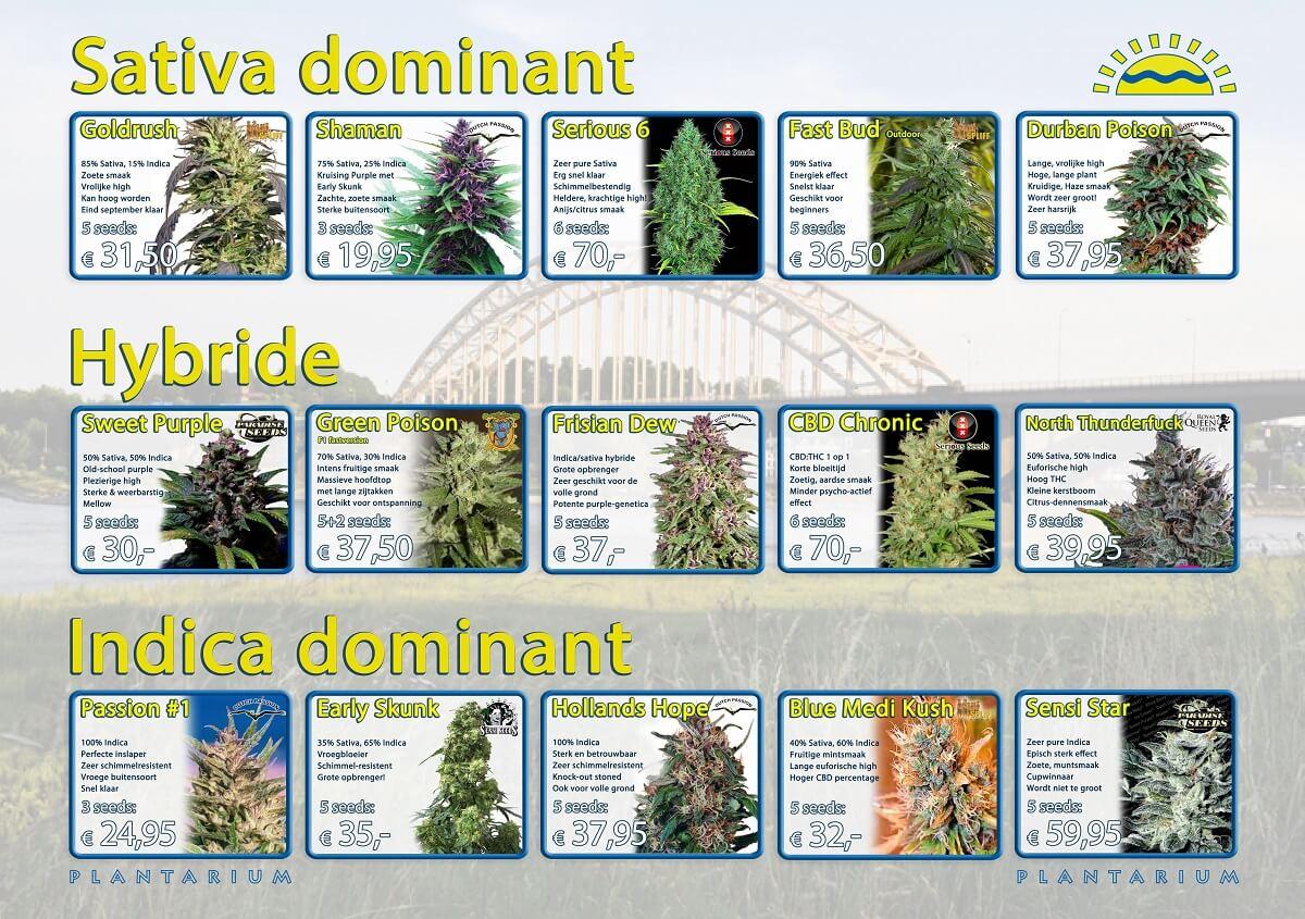 Cannabis beste buitensoorten Plantarium