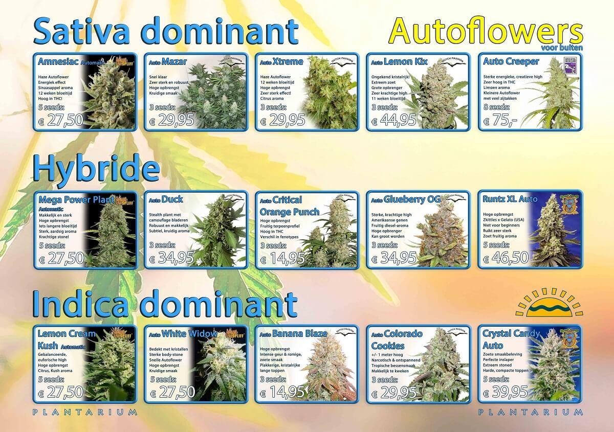 Plantarium Buitenzaden overzicht Autoflowers