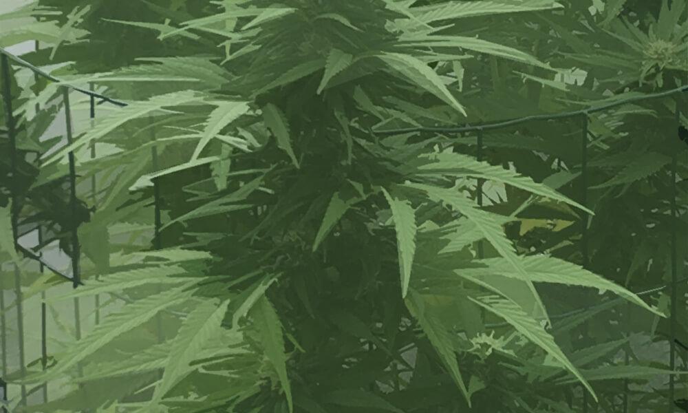 Cor's Kooi Kwekerij 4 plantarium nijmegen